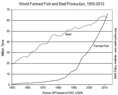 World Farmed Fish & Beef Production